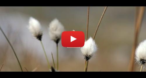 Youtube post by Parc Cenedlaethol Eryri - Snowdonia National Park: Be Safe, Tread Lightly, Be Kind . . .