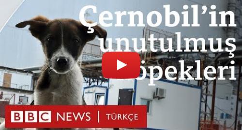 BBC News Türkçe tarafından yapılan Youtube paylaşımı: Çernobil'in unutulmuş köpekleri