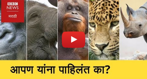Youtube post by BBC News Marathi: नामशेष होणारे ५ प्राणी कोणते? । Five Endangered Animals Species in the World (BBC News Marathi)