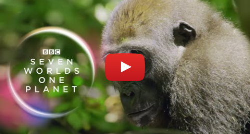 Youtube post by BBC Earth: Seven Worlds, One Planet  Extended Trailer (ft Sia and Hans Zimmer)   New David Attenborough Series