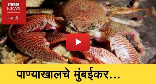 Youtube post by BBC News Marathi: See Mumbai's Marine Life And Biodiversity (BBC News Marathi)