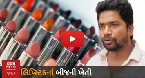 Youtube post by BBC News Gujarati: લિપ્સ્ટિકનો કલર કેમાંથી બને છે? મળો બીજની ખેતી કરતા ખેડૂતને