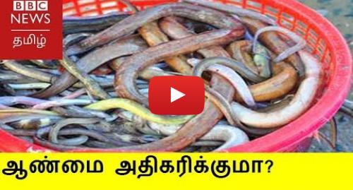 யூடியூப் இவரது பதிவு BBC News Tamil: ஆண்மையை அதிகரிக்கும் பாம்பு இறைச்சியை சமைப்பது எப்படி?