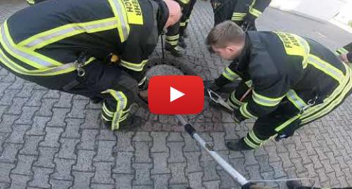 Youtube пост, автор: Berufstierrettung Rhein Neckar: Ratte steckt im Gulli fest