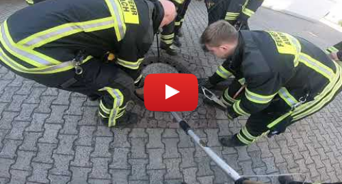 Youtube допис, автор: Berufstierrettung Rhein Neckar: Ratte steckt im Gulli fest