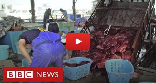 YouTube post de BBC News Brasil: Japão, o país onde as baleias voltaram ao cardápio