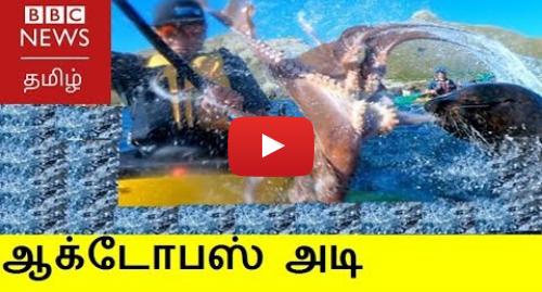 யூடியூப் இவரது பதிவு BBC News Tamil: படகில் சென்றவரை ஆக்டோபஸால் அடித்த நீர் நாய்