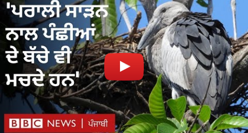 Youtube post by BBC News Punjabi: Stubble burning  ਪਰਾਲੀ ਸਾੜਨ ਵਾਲਿਆਂ ਨੂੰ ਵਾਤਾਵਰਣ ਪ੍ਰੇਮੀਆਂ ਦੀ ਕੀ ਹੈ ਗੁਹਾਰ I BBC NEWS PUNJABI