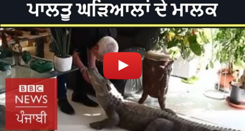 Youtube post by BBC News Punjabi: Home for 400 Reptiles | BBC News Punjabi