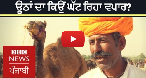Youtube post by BBC News Punjabi: Camel Trading  Why Pushkar is witnessing a fall | BBC NEWS PUNJABI