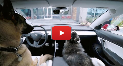 پست یوتیوب از Tesla: Introducing Dog Mode