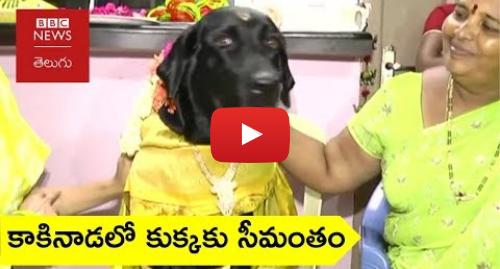 Youtube post by BBC News Telugu: కాకినాడలో కుక్కకు సీమంతం  'సొంత కూతురిలా పెంచుకుంటున్నాం'