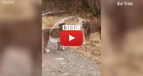 Youtube постту BBC News Кыргыз жазды: Сүлөөсүн эмне үчүн ачуу кыйкырат? - BBC Kyrgyz