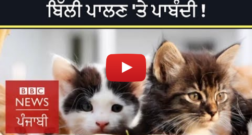 Youtube post by BBC News Punjabi: Why a village in New Zealand is trying to ban all cats   BBC NEWS PUNJABI