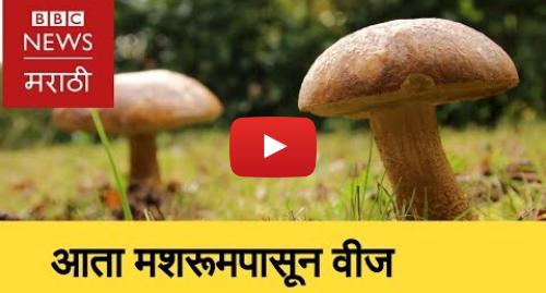 Youtube post by BBC News Marathi: Energy   Bacteria & mushroom can create electricity । आता मशरूमपासून  वीज (BBC News Marathi)