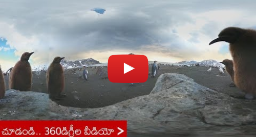 Youtube post by BBC News Telugu: 360 Video  Exploring a colony of king penguins and a group of elephant seals