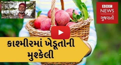 Youtube post by BBC News Gujarati: જ્યારે કાશ્મીરના ખેડૂતોના સફરજનનો પાક બગડી ગયો (બીબીસી ન્યૂઝ ગુજરાતી)