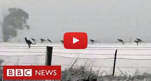 YouTube post de BBC News Brasil: As raras imagens de cangurus pulando na neve na Austrália
