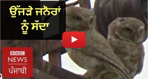 Youtube post by BBC News Punjabi: Nest Building for Birds Who Have Lost Their Traditional Habitat  BBC NEWS PUNJABI