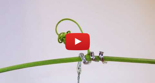 پست یوتیوب از Istituto Italiano di Tecnologia: The first tendril-like soft robot able to climb
