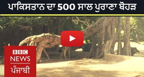 Youtube post by BBC News Punjabi: Cutting this 500-year-old tree in Pakistan can mean 'bad omen' | BBC NEWS PUNJABI