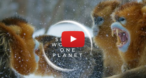 Youtube post by BBC Earth: Seven Worlds One Planet  New Trailer | David Attenborough Series |  BBC Earth