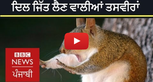Youtube post by BBC News Punjabi: Comedy Wildlife Photography Awards 2018   Two Indians make the mark too