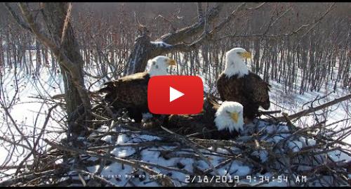 Youtube пост, автор: Stewards of the Upper Mississippi River Refuge: Trio Eagle Cam Stewards of the Upper Mississippi River Refuge Live Stream