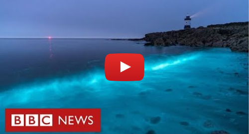 YouTube post de BBC News Brasil: Plâncton bioluminescente cria espetáculo de luz no mar