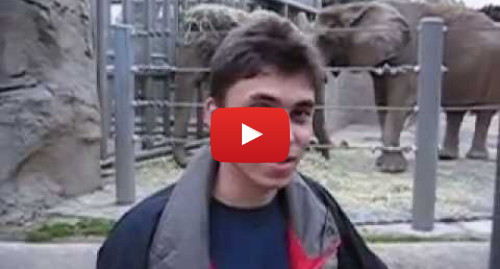 Youtube пост, автор: jawed: Me at the zoo