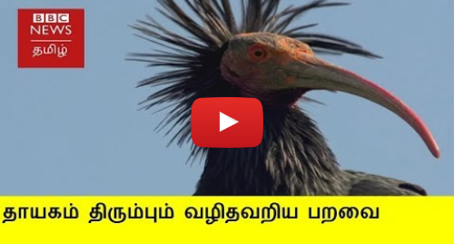 யூடியூப் இவரது பதிவு BBC News Tamil: விமானத்தை பின்பற்றி தாயகம் திரும்பும் வழிதவறிய பறவைகள்