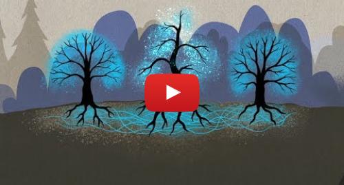 Publicación de Youtube por BBC News Mundo: El fascinante mundo que se esconde bajo tus pies