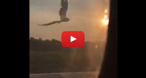 Youtube пост, автор: Iurii: Момент попадания птиц в двигатель Airbus A321
