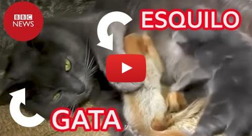 YouTube post de BBC News Brasil: Gata adota quatro filhotes órfãos de esquilo