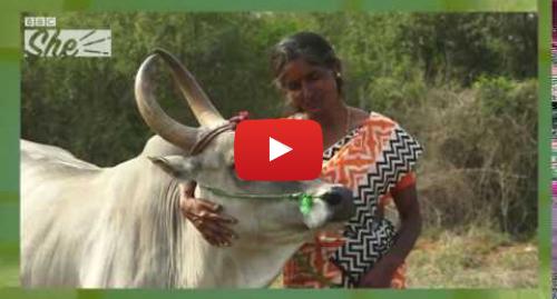 யூடியூப் இவரது பதிவு BBC News Tamil: லாபம் கொழிக்கும் காளை வளர்ப்பு - பெண்ணின் வெற்றிக்கதை