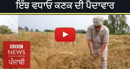 Youtube post by BBC News Punjabi: Race to develop a climate change resistant wheat gets a major boost   BBC NEWS PUNJABI