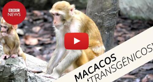 YouTube post de BBC News Brasil: Genes humanos em cérebros de macacos