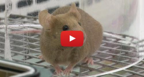 """Publicación de Youtube por BBC News Mundo: Dentro de una """"fábrica"""" de ratones de laboratorio BBC MUNDO"""