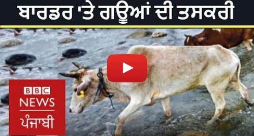 Youtube post by BBC News Punjabi: How is cow smuggling done on India-Bangladesh border? |  BBC NEWS PUNJABI