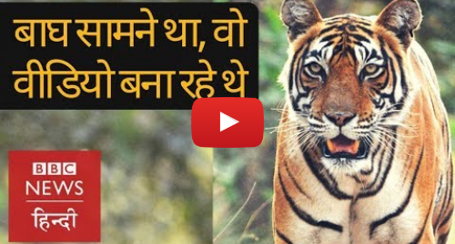 यूट्यूब पोस्ट BBC News Hindi: The moment a tiger came in front of forest guards in Satpura Tiger Reserve (BBC Hindi)