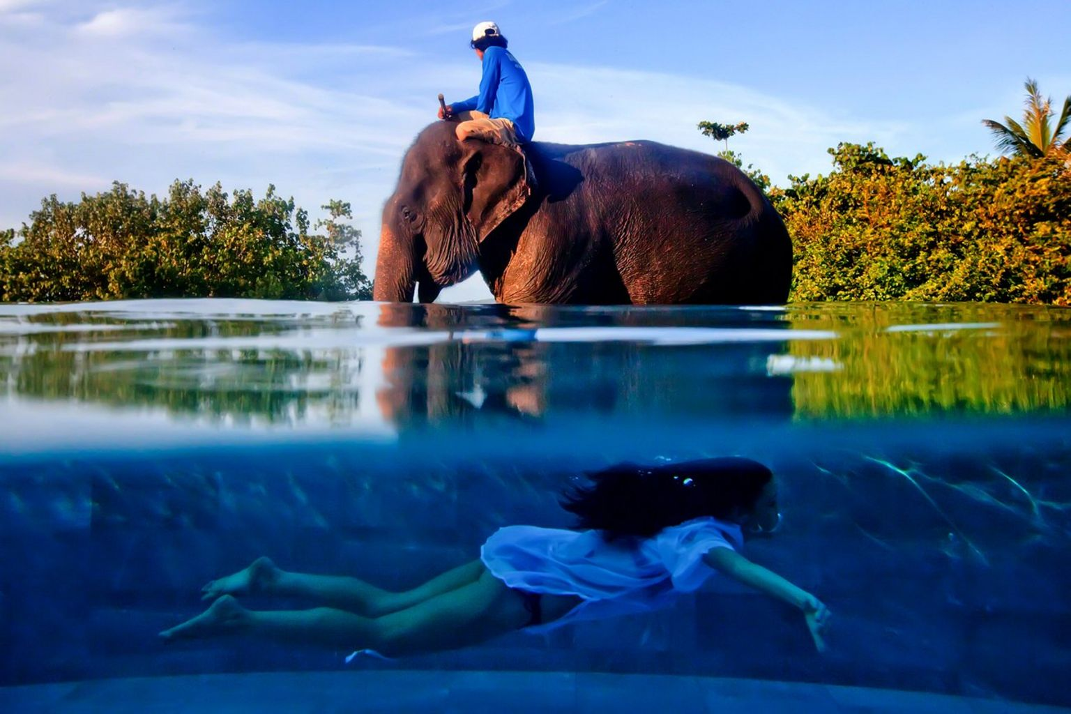 Elephant - Phuket, Thailand