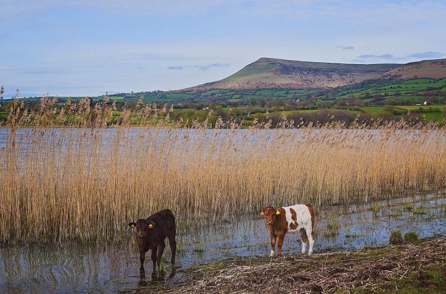 Llyn Llangors o Llangasty