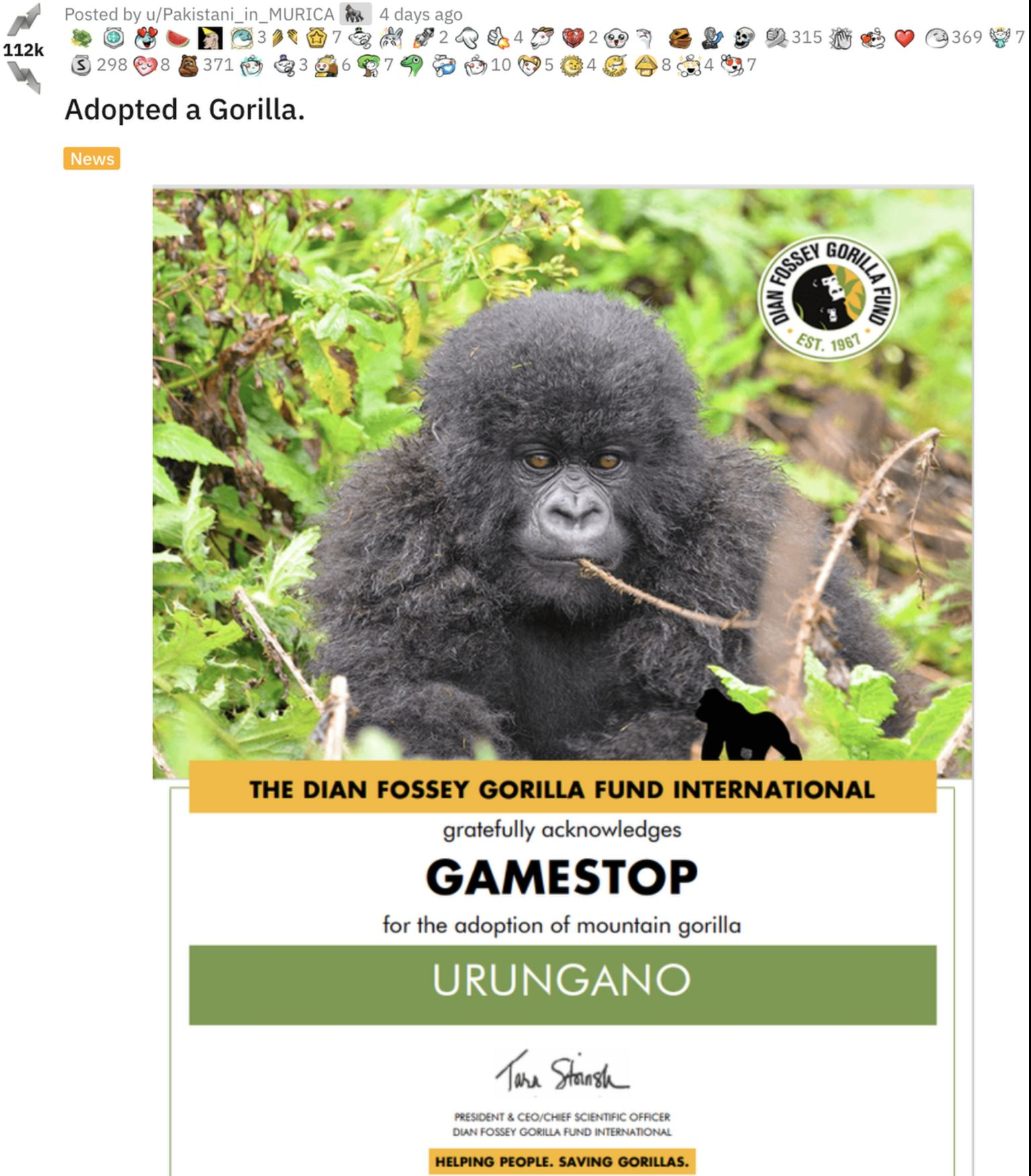 An adoption certificate showing an infant gorilla named Urungano