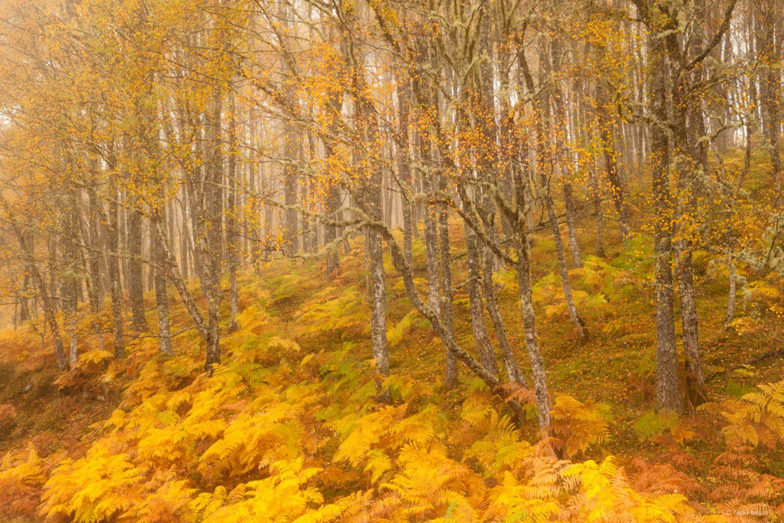 Autumn in Glen Affric