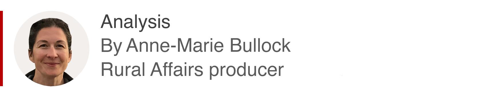 Anne-Marie Bullock analysis box