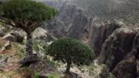 Socotra valley