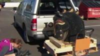 Полиция Новой Зеландии обнаружила огромную партию кокаина – самую большую в истории страны - в скульптуре в виде головы лошади, инкрустированной стразами.