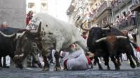Bulls running and man on ground