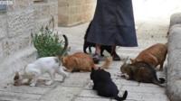 """""""Cat lady"""""""