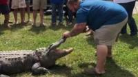 A Louisiana family throw a baby gender reveal party with and alligator.